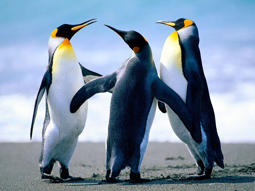 Three Empire Penguins Playing In The Sun On A Partly Cloudy Day