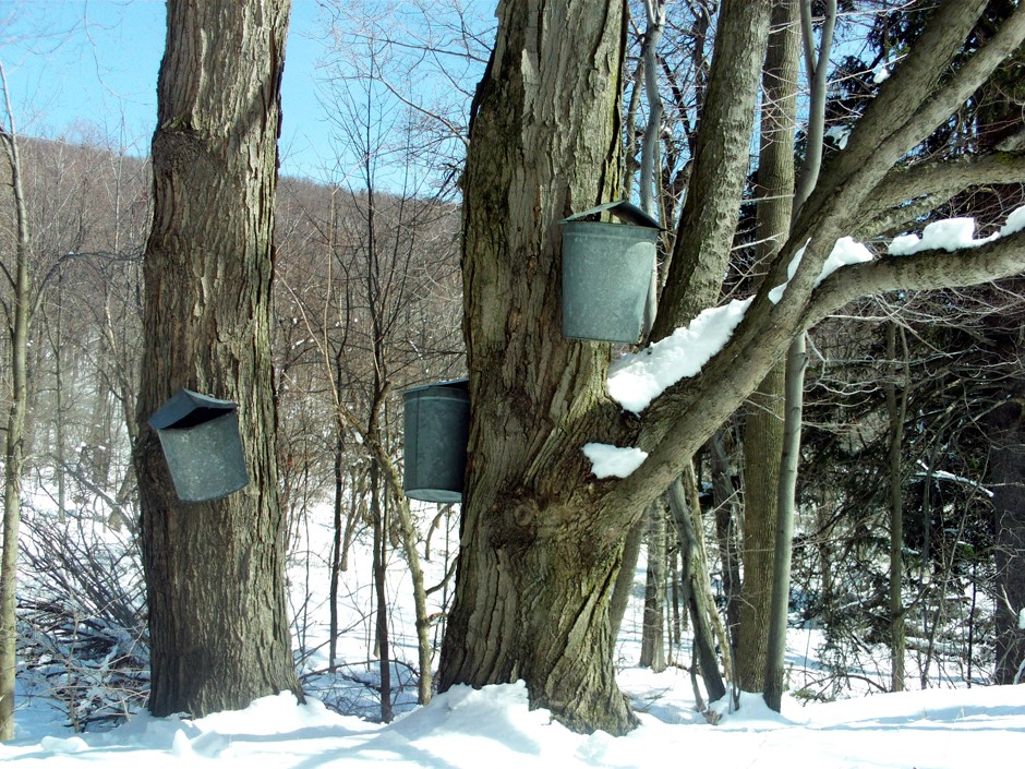 Maple Syrup Buckets - Cumming Nature Center