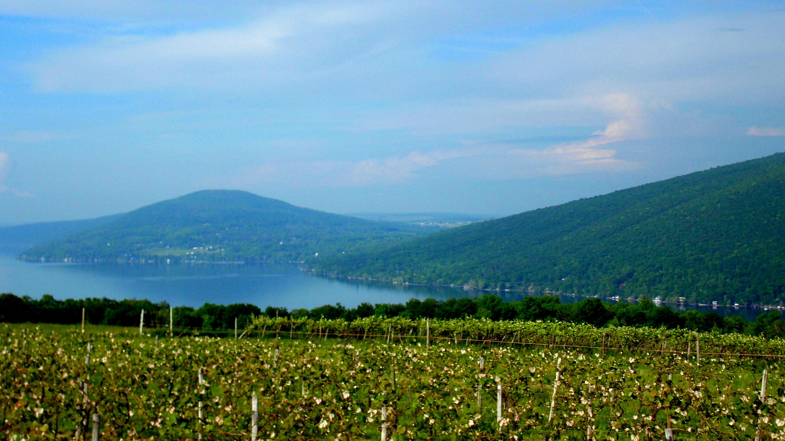 Vineyard on Canandaigua Lake